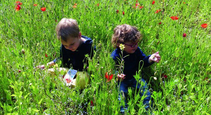 découverte fleurs